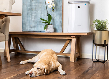 Sharp air purification solutions - dog